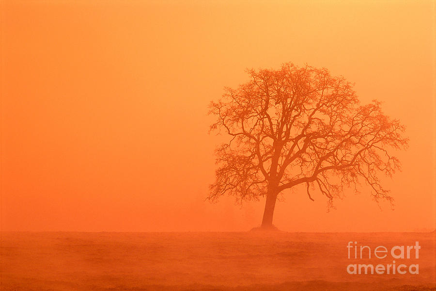 Bare Photograph - Oak At Sunrise by Greg Vaughn - Printscapes