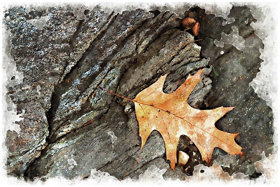 Oak Digital Art - Oak Leaf On The Rocks by Peter J Sucy