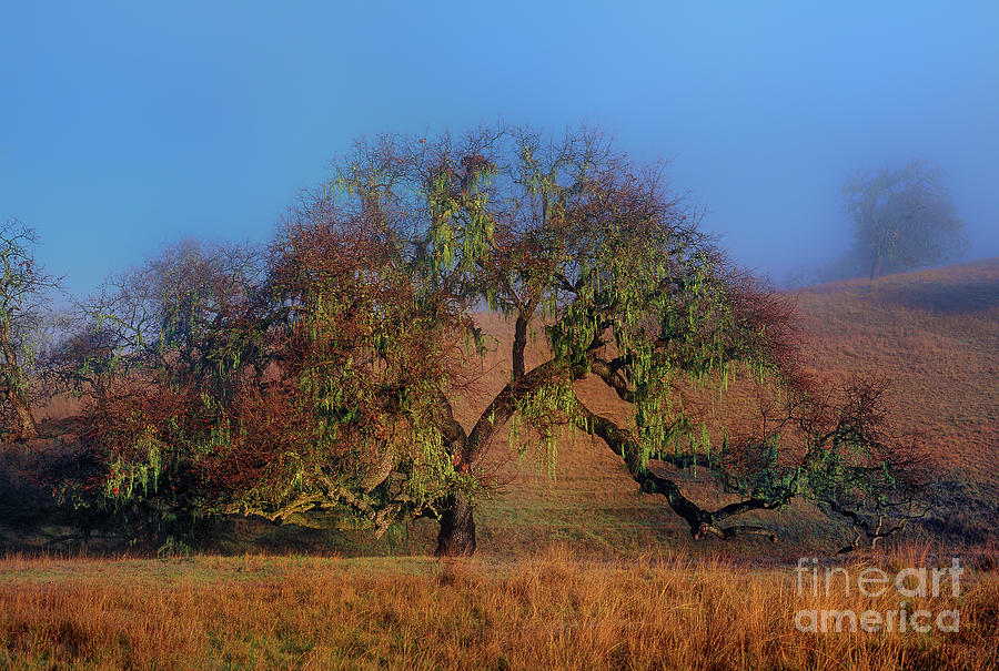 oak tree fog lake cachuma california by Dave Welling