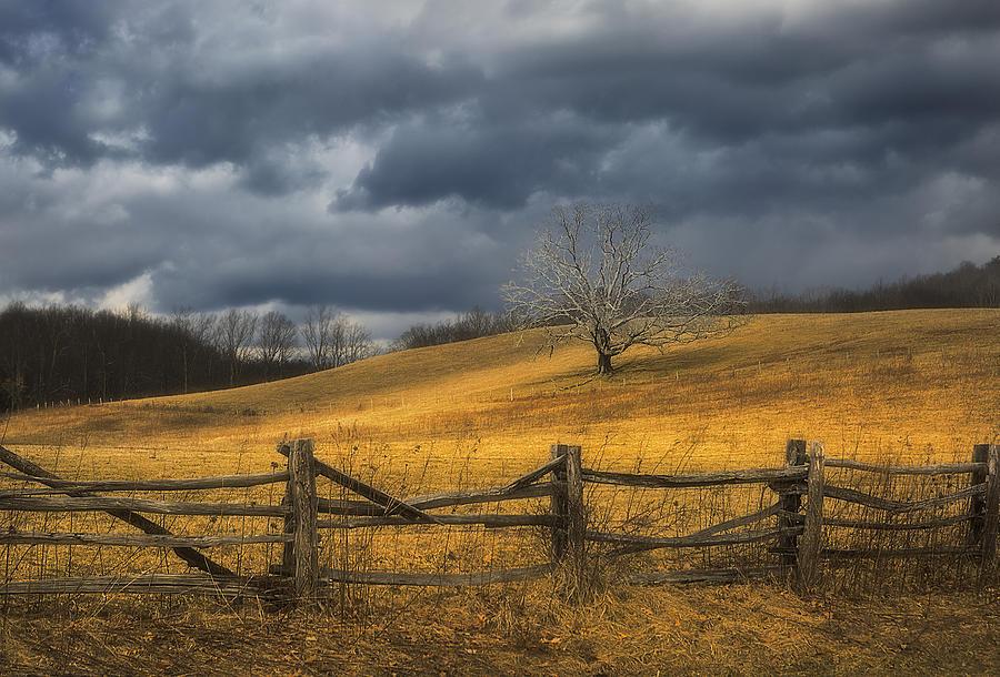 Oak Tree Photograph - Oak Tree In Storm by Ken Barrett