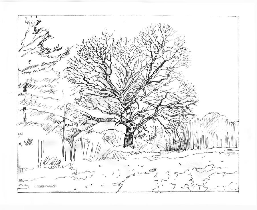 Oak Tree Drawing - Oak Tree in Winter Snow by John Lautermilch