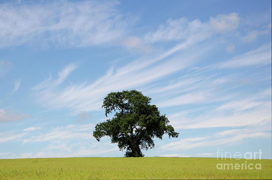 Oak Photograph - Oak Tree Landscape by Steev Stamford