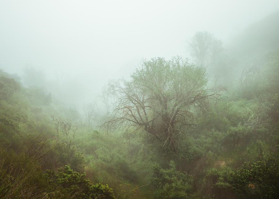 Oaks In Foggy Ravine Photograph By Alexander Kunz