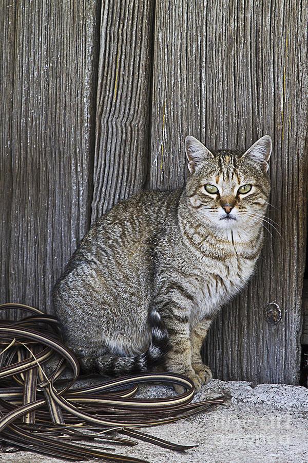 Observant Pet-cat Photograph