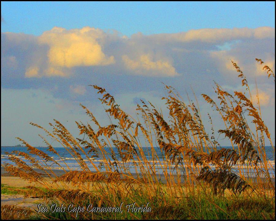 Nature Photograph - ocean/ Beach by W Gilroy