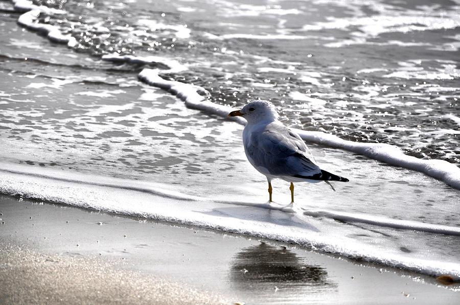 Ocean Photograph - Ocean Calm by Emily Stauring
