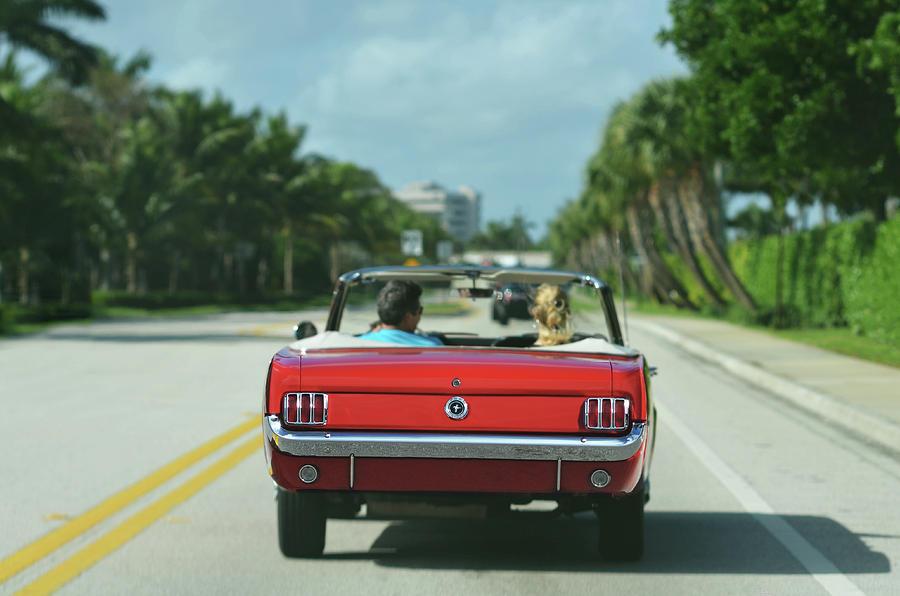 Ocean Drive - 1965 Mustang by Laura Fasulo