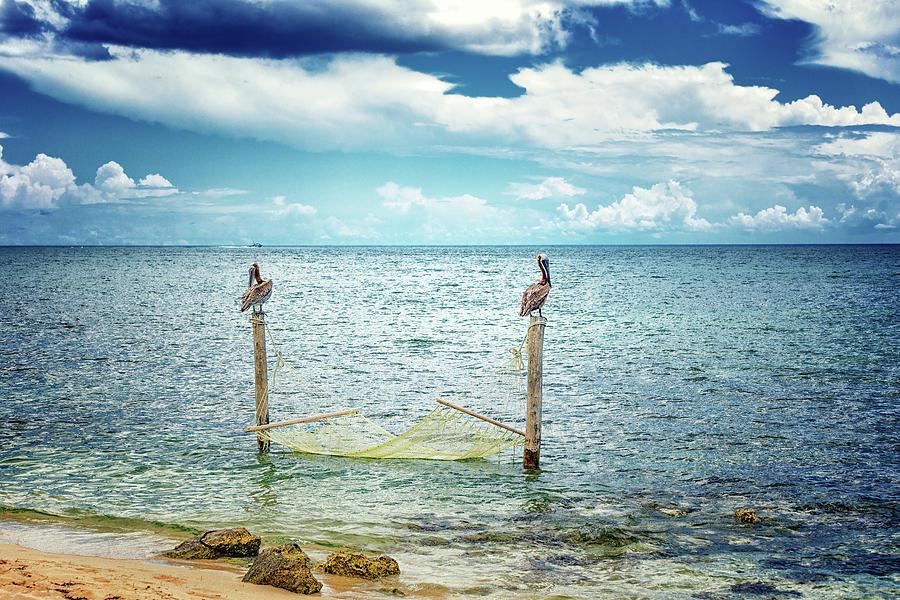Ocean Hammock by Victor Culpepper