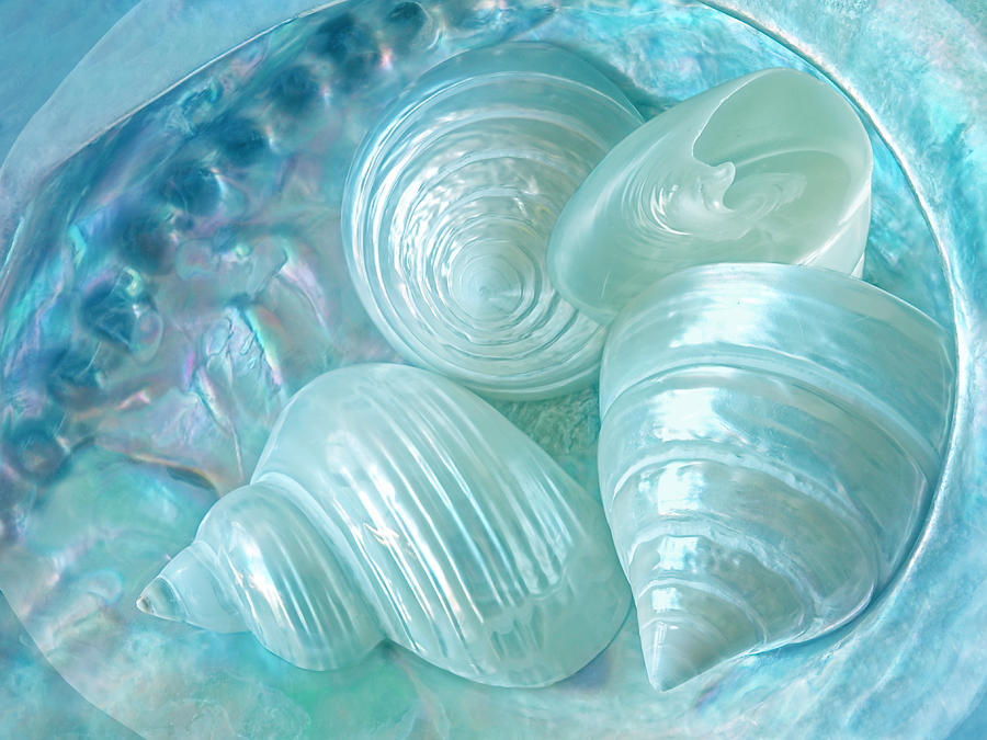 Ocean Pearl Treasure by Gill Billington