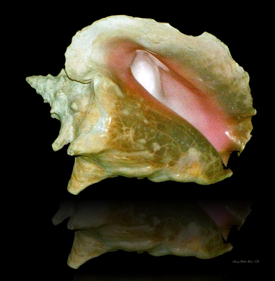 Shell Photograph - Ocean Treasure by Sherry Holder Hunt