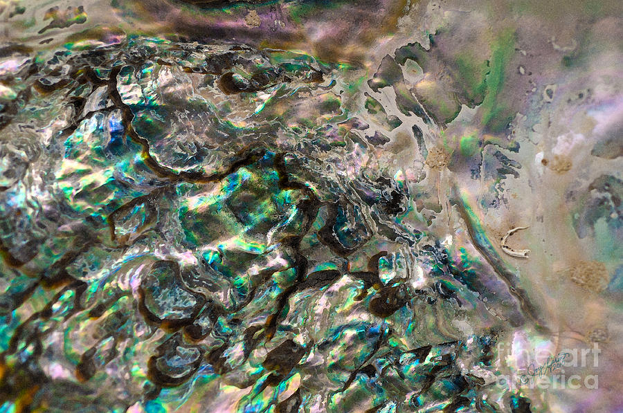 Abalone Shell Photograph - Oceanic Eruption by Joy Gerow