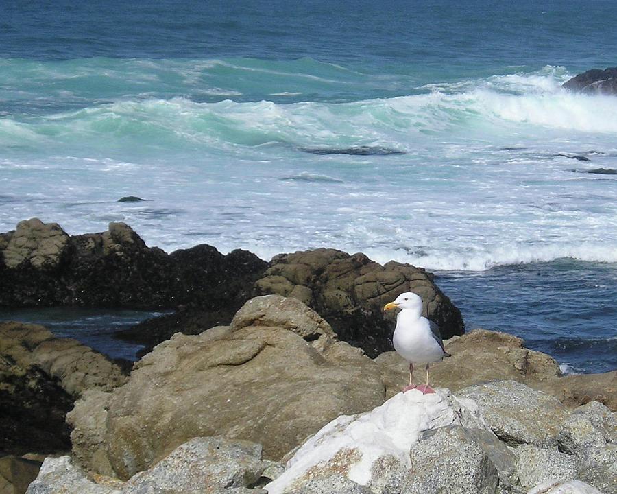 Beach Photograph - Oceanside by Lea Rhea Photography