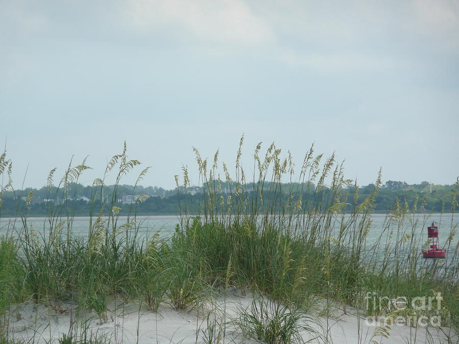 Scenery Photograph - Oceanview Through Seaoats by Barb Montanye Meseroll