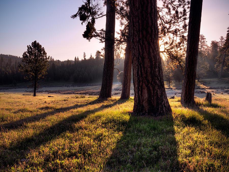 Beautiful Photograph - Ochoco Meadow by Leland D Howard