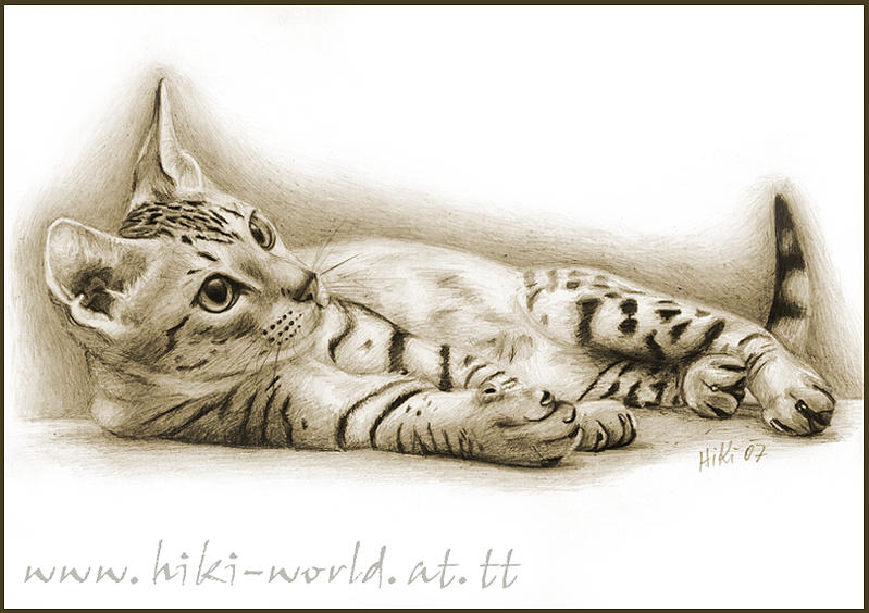 Cat Drawing - Ocicat Kitten by Pia HiKi