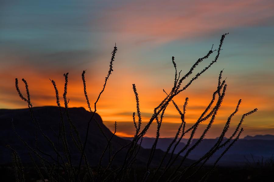 Ocotillo at Sunset by Steven Schwartzman