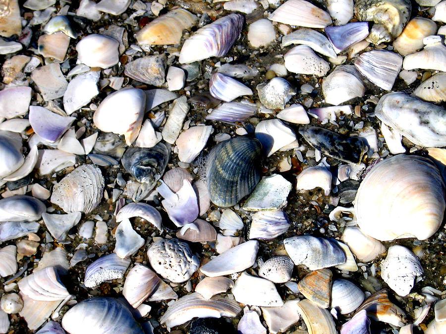 Ocracoke Photograph - Ocracoke Shells by Wayne Potrafka