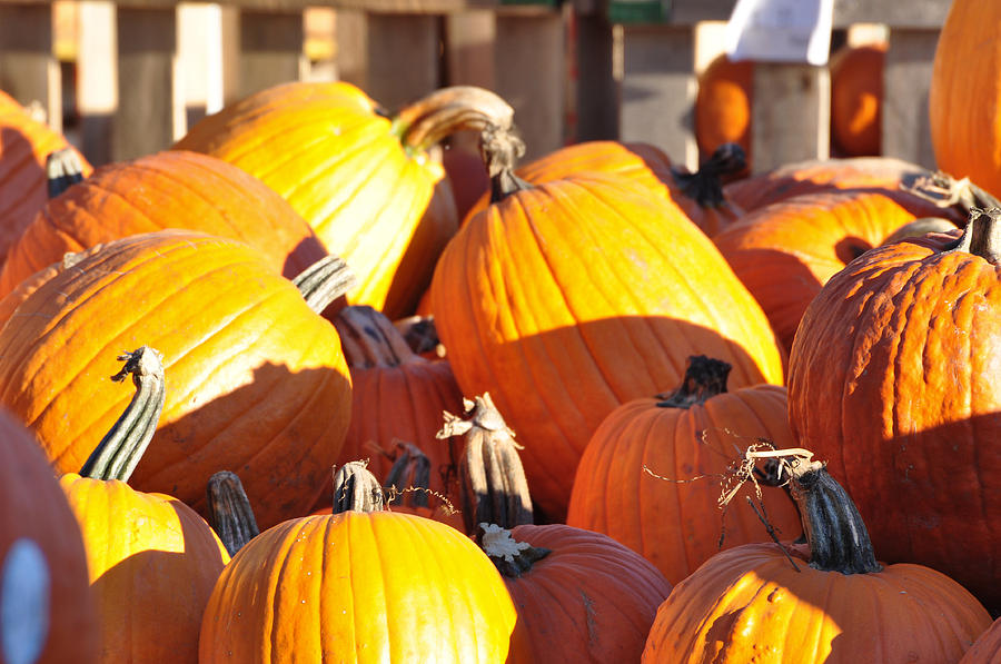 Pumpkins Photograph - October Color by Jan Amiss Photography