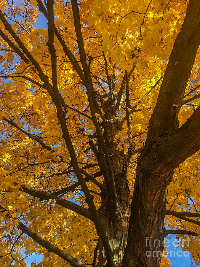 Michigan State University Photograph - October Day by Joseph Yarbrough