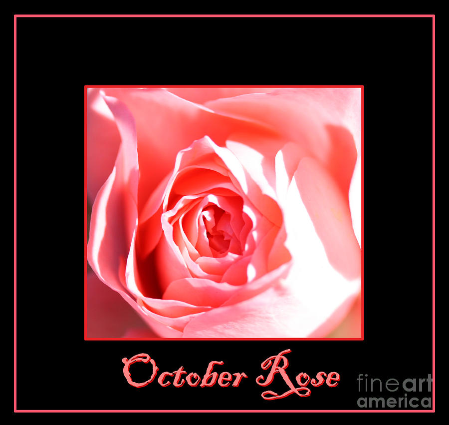October Rose Photograph - October Rose by Nick Gustafson