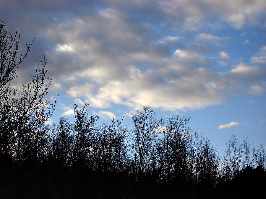 Trees Photograph - October Skies by Marilynne Bull