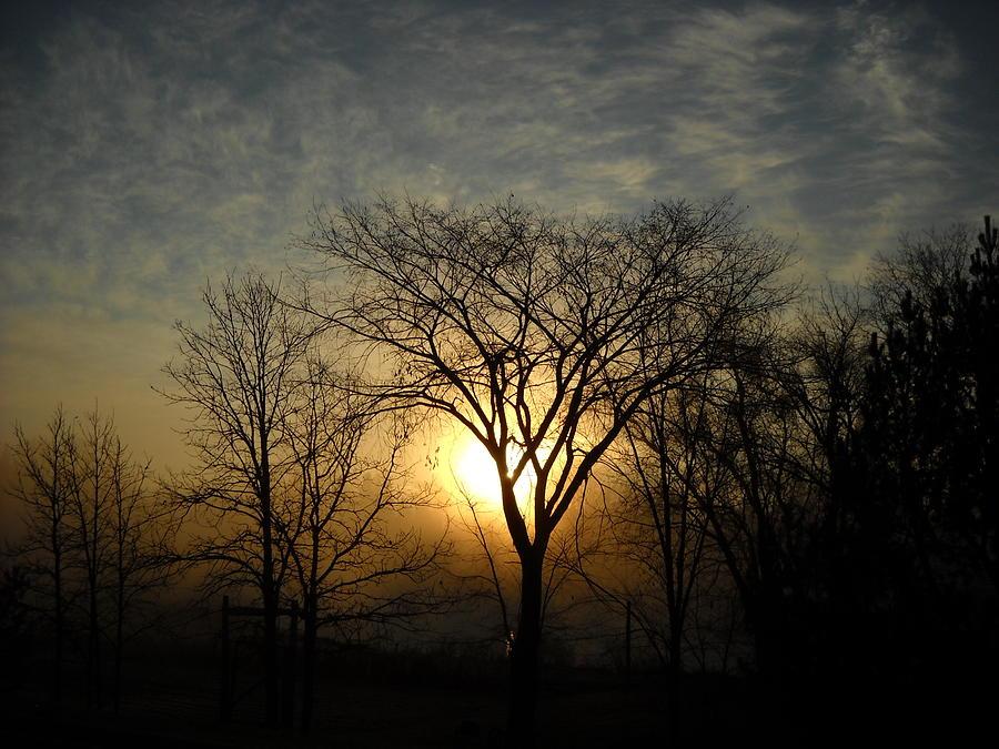 October Sunrise Behind Elm Tree by Kent Lorentzen