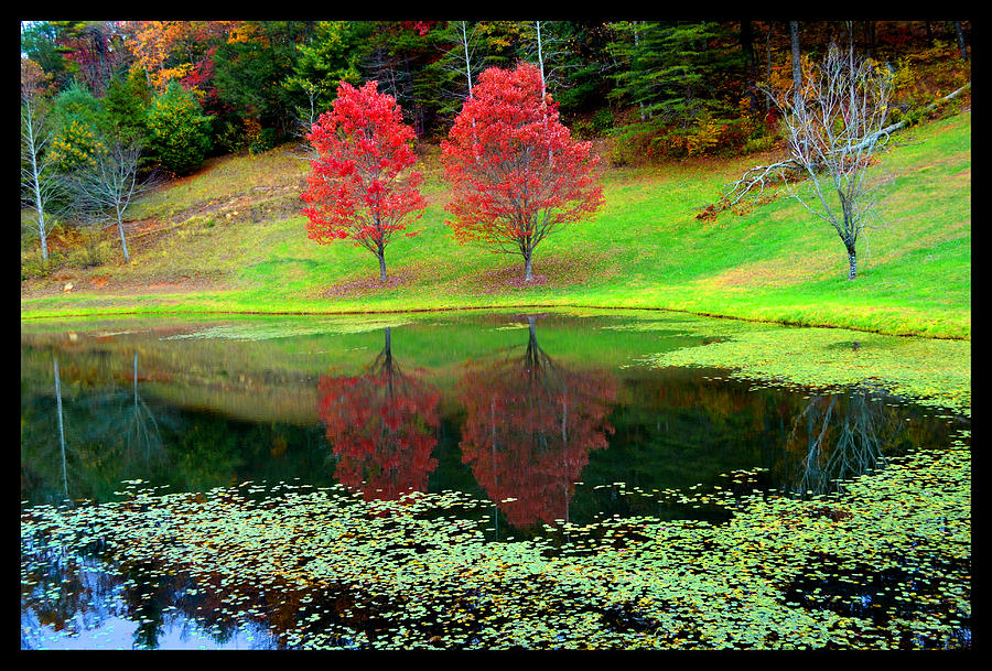 Western North Carolina Photograph - Octobers Last Afternoon by Susanne Still