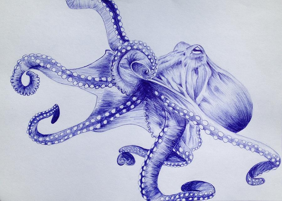 Octopus Drawing   Octopus By Graciela Acosta