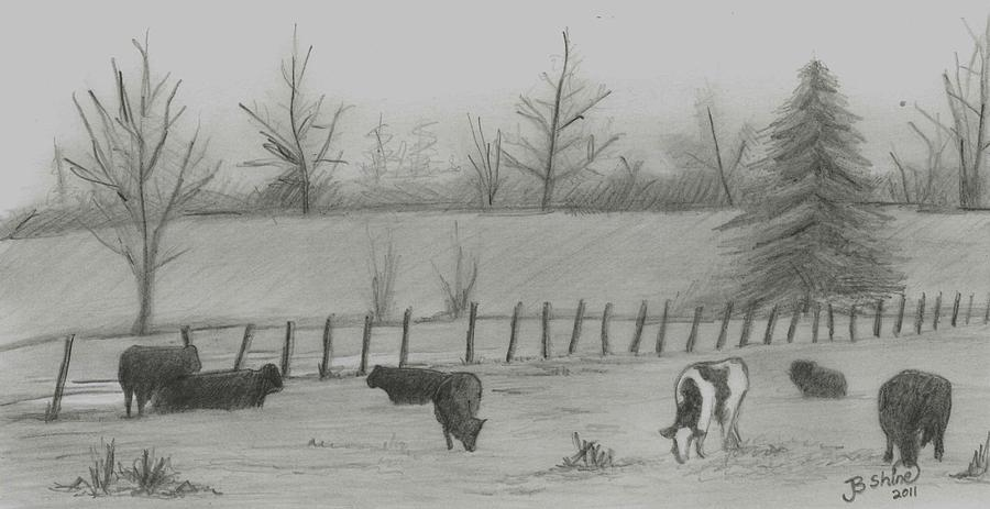 Cattle Drawing - Odd Ball by BJ Shine