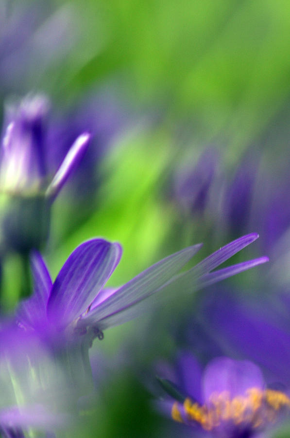 Purple Photograph - Ode To Monet by Rebecca Cozart