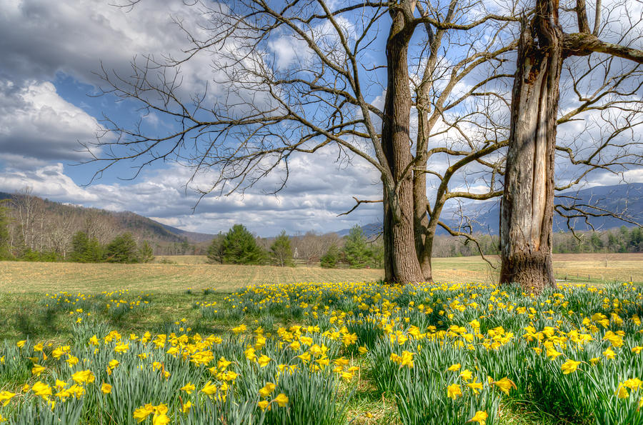 Blount County Photograph - Ode to Wordsworth by Kristina Plaas