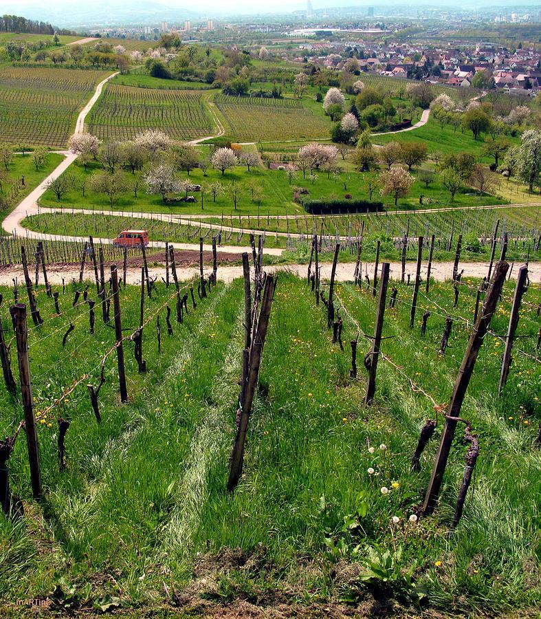 Oetlingen Vineyard View Photograph