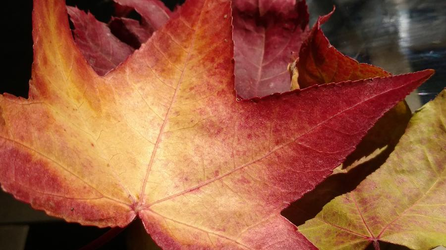 Fall Photograph - Of Fall by Frederick Messner