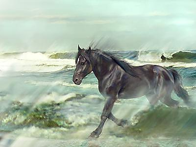 Horse Painting - Of Wind And Sea- Black Stallion Running In Ocean by Connie Moses