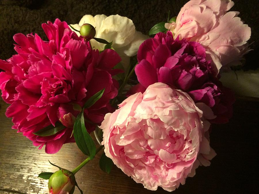 Flowers Photograph - Off Center Peonies by Gillis Cone