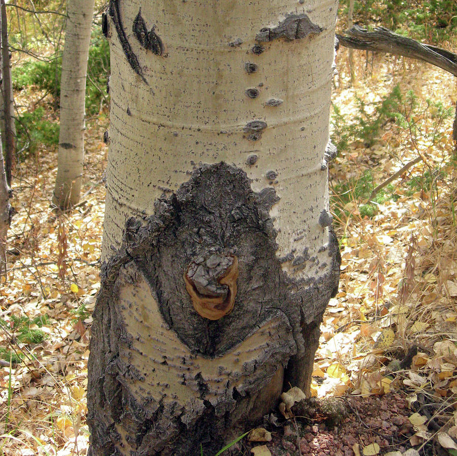 Ogre Seen on An Aspen Tree by Julia L Wright