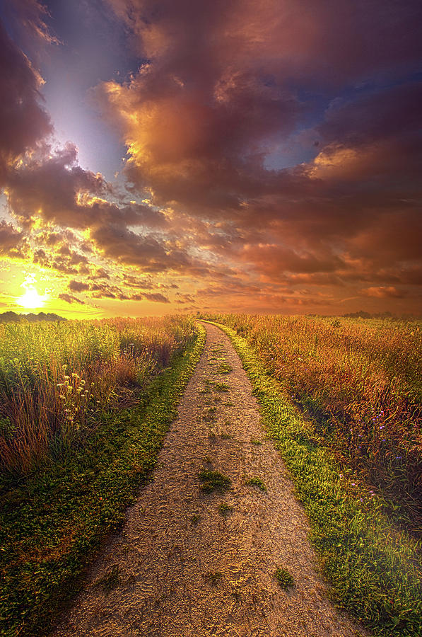 Life Photograph - Oh Brother Where Art Thou by Phil Koch