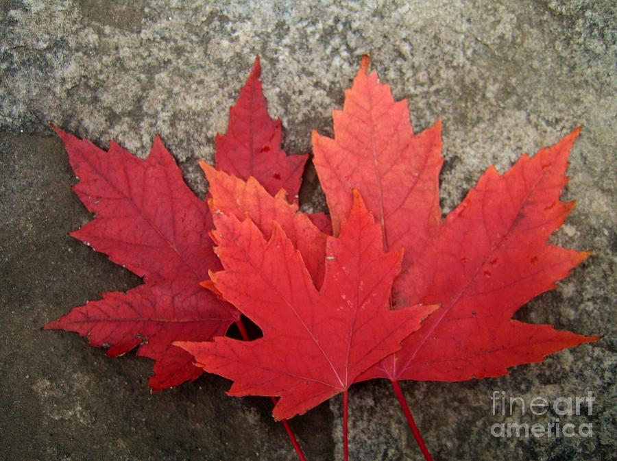 Canadian Symbols Photograph - Oh Canada by Reb Frost