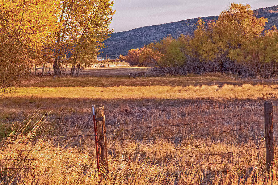 Fence Photograph - Oh Deer by Nancy Marie Ricketts