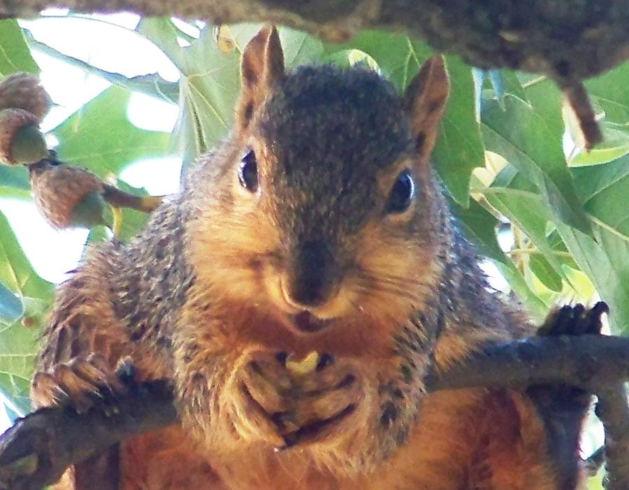 Squirrels Photograph - Oh Nuts by Linda Henriksen