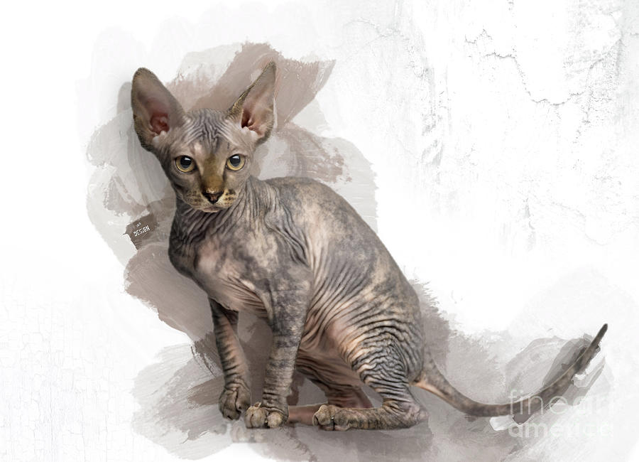Ohhh, That Adorable Sphynx Kitten