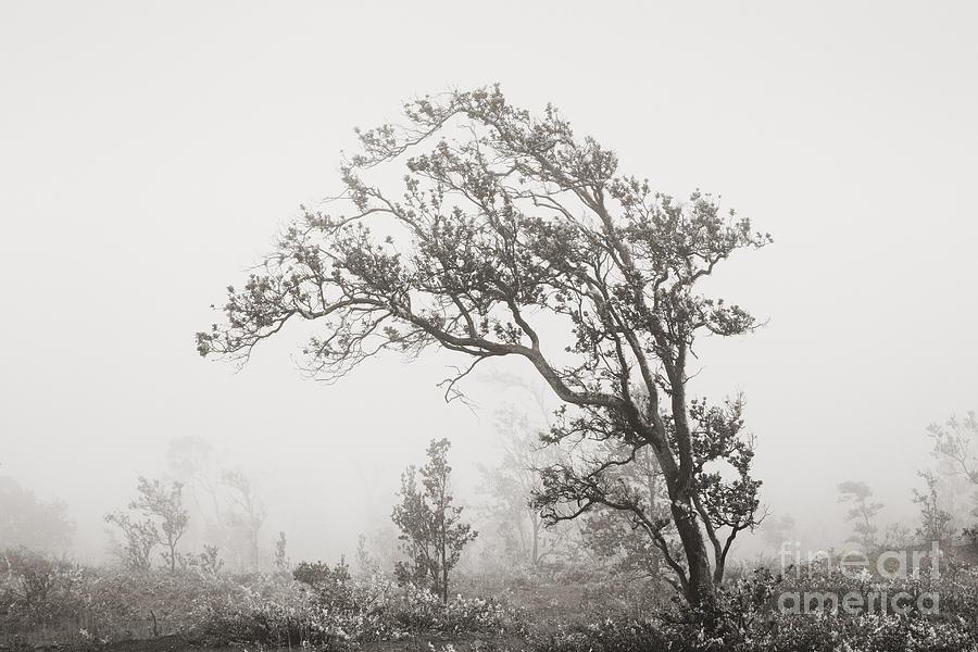 Art Medium Photograph - Ohia Lehua Tree by Greg Vaughn - Printscapes