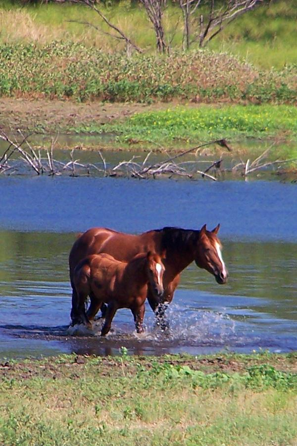 Horses Photograph - Okay Time To Go. by Lilly King