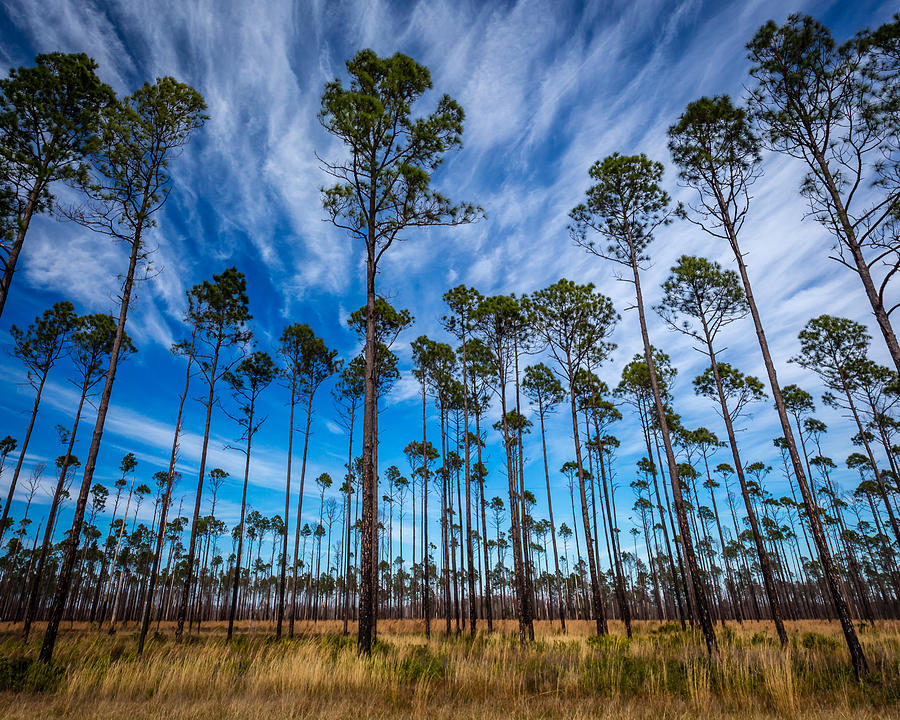 Love Photograph - Okefenokee Sky by Gary Migues
