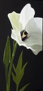 Botanical Painting - Okra Plant by W James Taylor