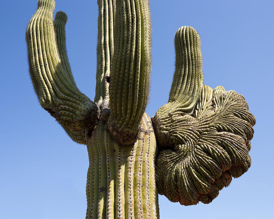 Saguaro Photograph - Old And Sagging by Kelley King