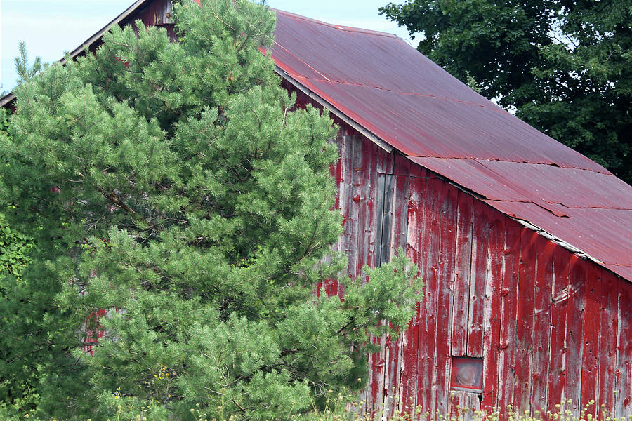 Old Red Barn Photograph - Old And Worn 2 090118 by Mary Bedy