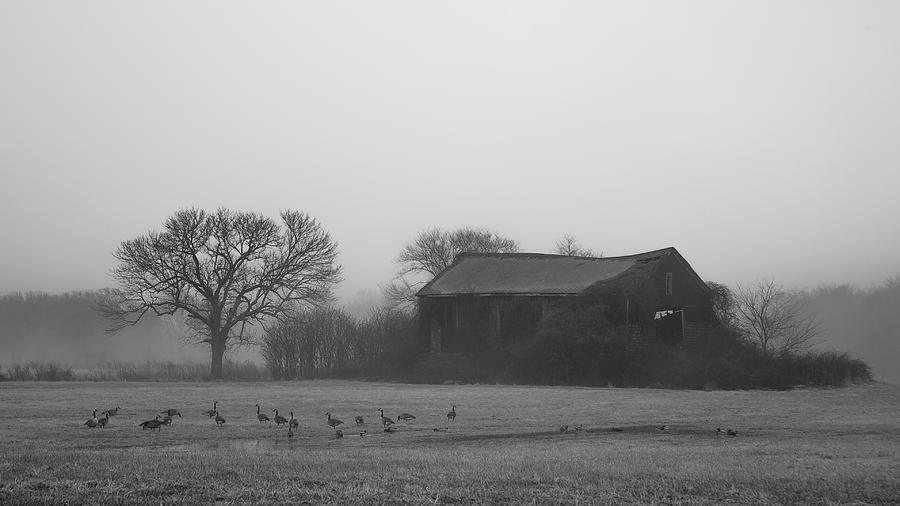 Old Barn in Fog - Black and White by Kirkodd Photography Of New England