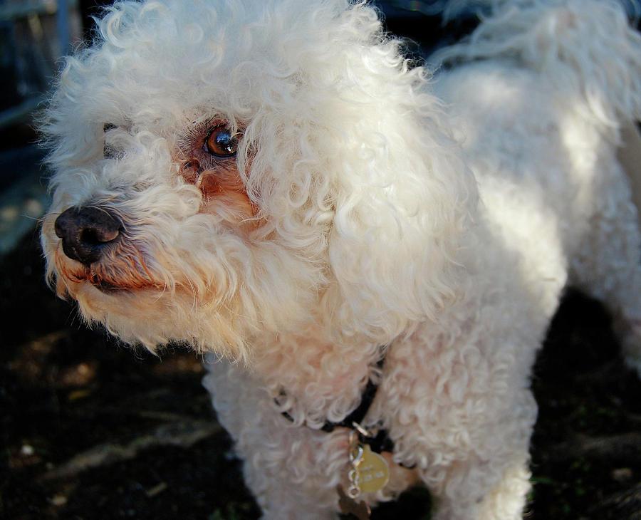 Dog Photograph - Old Buddy by JAMART Photography
