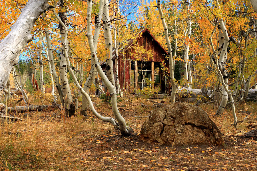 Cabin Photograph - Old Cabin In The Aspens by James Eddy